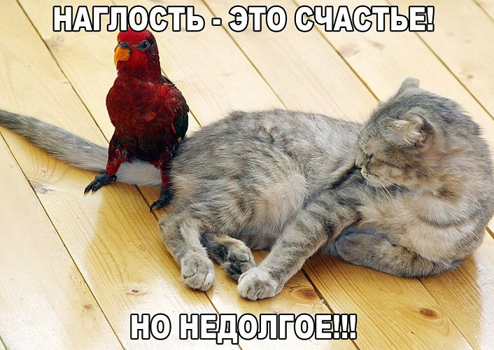http://2017.f.a0z.ru/11/17-5616185-original-6-.jpg